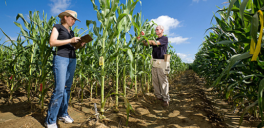 New App Speeds Search For Crop Traits