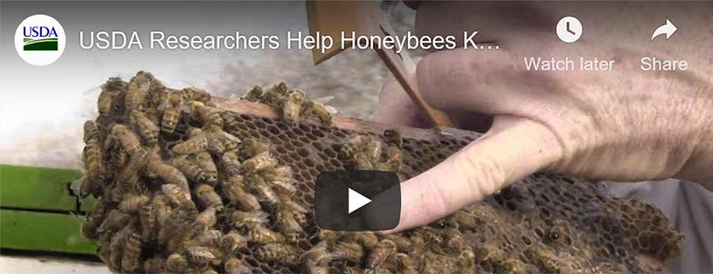 Featured Tellus Content: Helping Honey Bees (video)