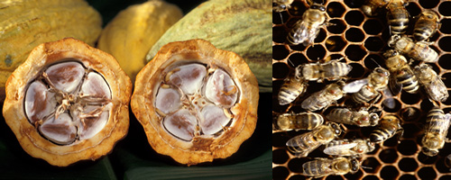Cacao Pods and Honey Bees on Honeycomb
