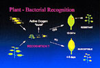 Plant baterial recognition graphic