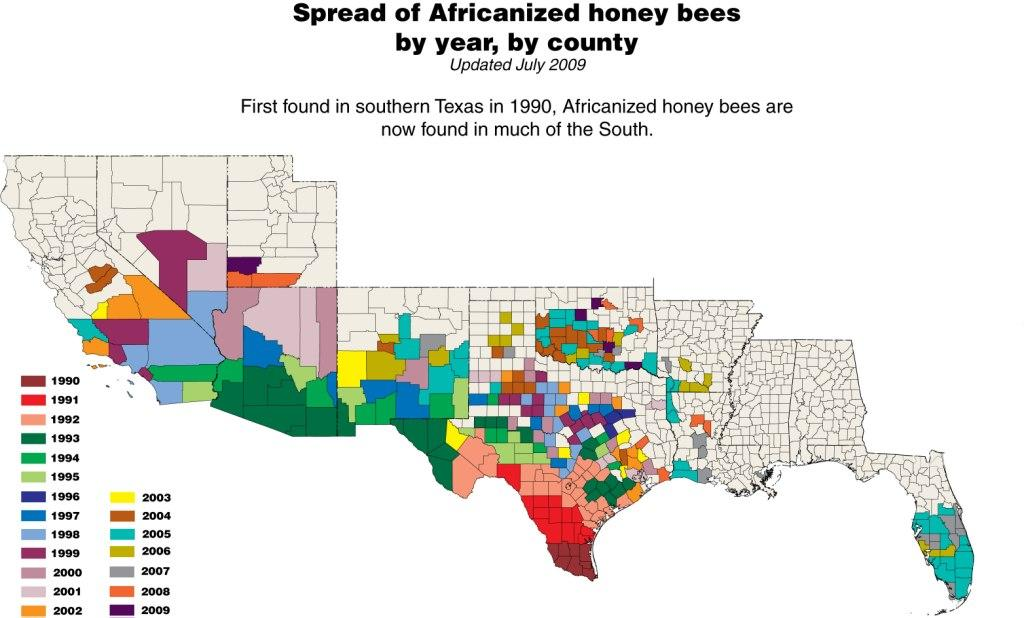 Africanized Killer Bee Infographic Facts Statistics Map In US - Map from us to african