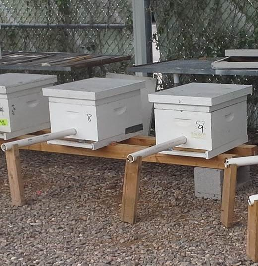 /ARSUserFiles/20220500/Varroa/Current Research/Bee Hive Box with Tube 1.jpg
