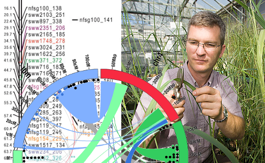 The genetics of plant species are being investigated for use in bioenergy. Molecular biologist Christian Tobias samples switchgrass plants for later extraction of DNA.