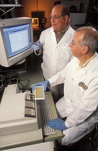 Scientists review results of immunoassay. ARS photo K11635-1