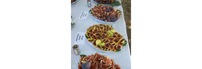Tasting evaluation event of the fig