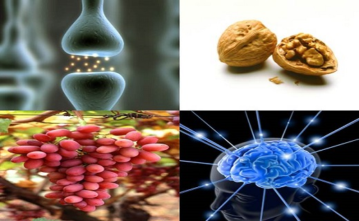 The Stress Biology & Nutrition Research Initiative is one of the first of its kind created to facilitate innovative research bridging nutrition, agriculture, stress biology, and psychological health.