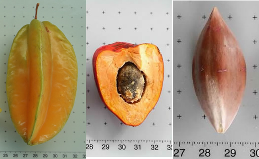 Averrhoa carambola (star fruit), Bactris gasipaes (peach palm), Canarium ovatum (pili nut).