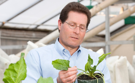 <b>Improving sugar beet germplasm and disease management to increase yield and reduce product losses.</b>
