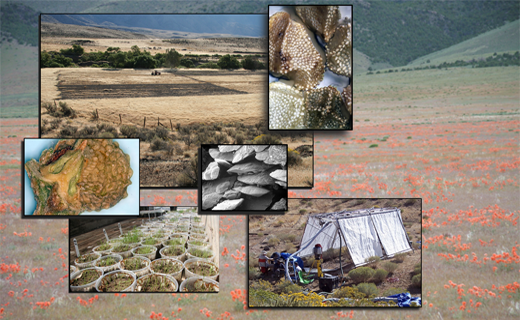 GBRR conducts research at a range of scales from point, to field, to landscape at diverse field sites across the Great Basin. 