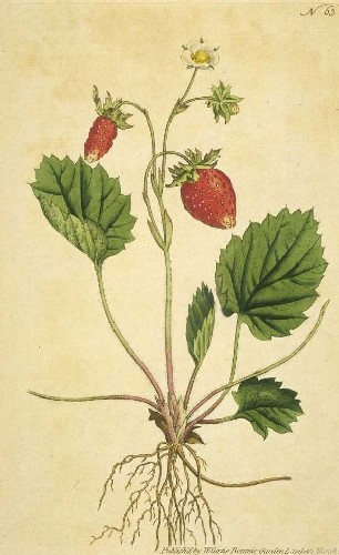 old strawberry print