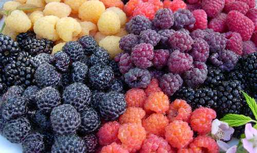 assorted raspberry and blackberry fruits