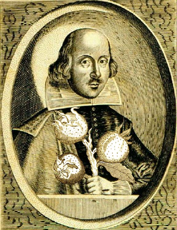 Shakespeare with Medlars