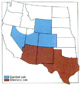 Distribution map of shinnery oak and gambel oak.
