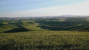 The Palouse Region