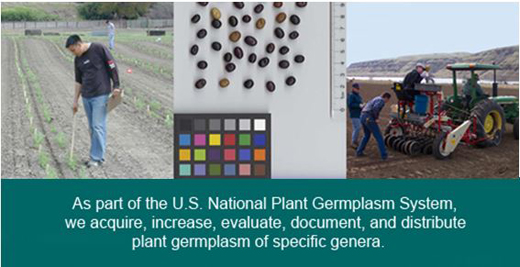 Cool season food legume germplasm project focuses on the conservation, characterization and utilization of pea, lentil, chickpea, faba bean, grass pea, lupin and <i>Trigonella</i> genera.
