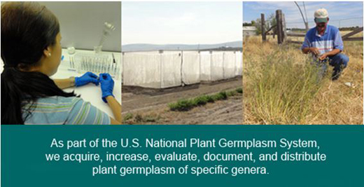 The USDA Temperate Forage Legume Genetic Resources Unit conserves, grows, and distributes seed and information for 13,000 accessions of alfalfa, clover and trefoil to users worldwide.