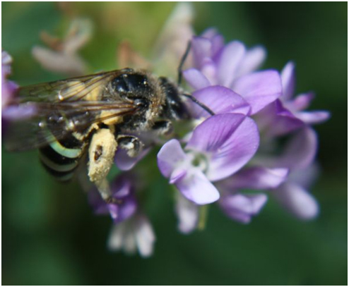 Image of bee pollination