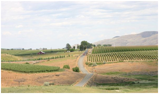 Image of fields around Yakima