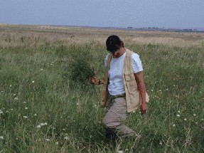Collecting wild relatives of alfalfa Kazakhstan
