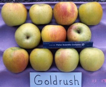 Home Orchard Society Forums - View topic - Apples - Mollies Delicious
