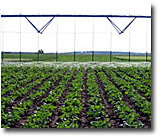 Picture of irrigation research in a sugarbeet field