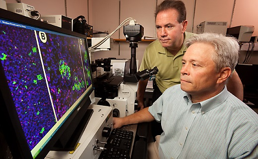 Houston, TX - At the Children's Nutrition Research Center in Houston, Texas, ARS physiologist and professor of pediatrics Doug Burrin (left) and associate professor of pediatrics Darryl Hadsell examine a microscope image of pancreatic beta cells obtained from piglets fed by total parenteral nutrition.