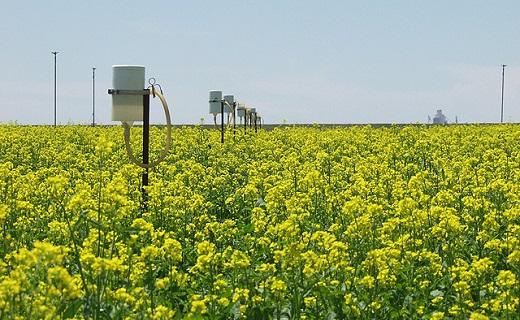 Akron, CO - ARS scientists used data from this canola study in Akron, Colorado, to measure the crop's water use and yield and to validate a computer model to assess the potential profitability of future crops grown in Colorado.