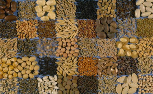 A variety of seeds stored at NLGRP