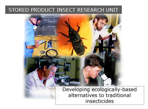 A collage of researchers and insects