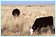 /ARSUserFiles/30300500/images/quickLinks/Rangeland.png