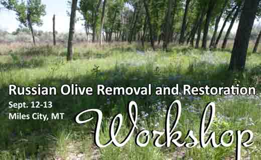 Russian Olive Workshop, September 12-13, 2016 in Miles City, MT