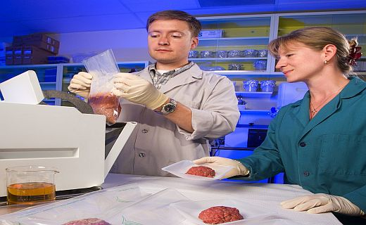 Testing ground beef for pathogens.