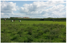 /ARSUserFiles/34905/Brunet Lab Photos/Alfalfa Management 2.png
