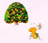 Diaprepes task force cartoon of grub attacking orange tree