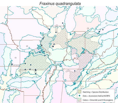 Fraxinus quadrangulata - distribution, collected sites, Omernik Level III ecoregions.