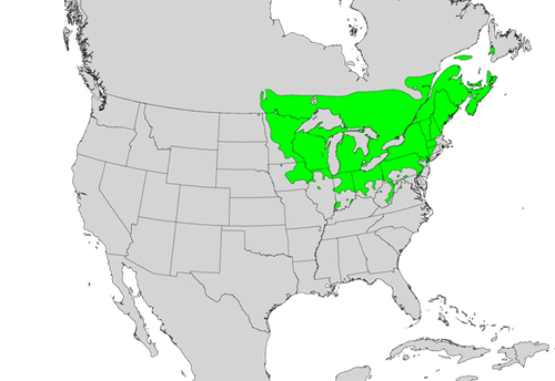 Fraxinus nigra species distribution.