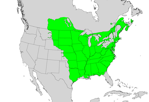 Fraxinus pennsylvanica species distribution.