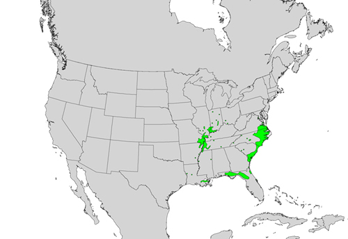 Fraxinus profunda species distribution.