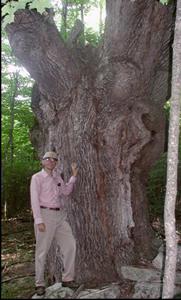 Mark Widrlechner, Horticulturist
