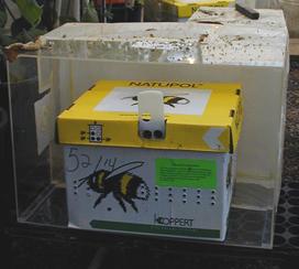 Bombus Cardboard Domicile Box