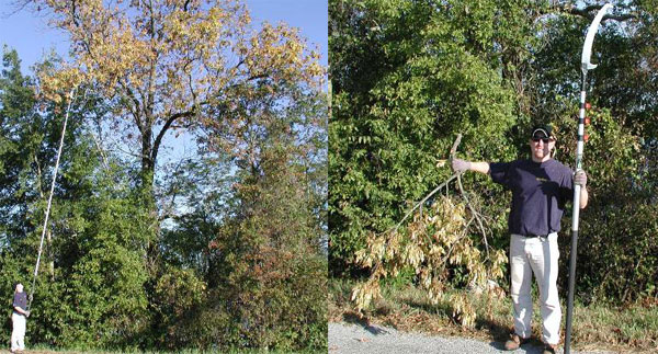 The use of a pole saw throughout the trip was definitely key in obtaining seeds from ash trees. Simply pruning one small branch can generate a large amount (2,000-5,000) of seed.