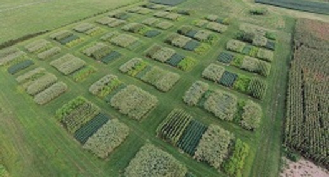 Arial view research plots