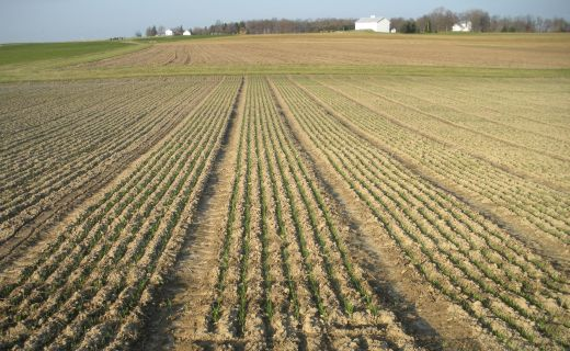 Ohio leads the U.S. in soft red winter wheat production.