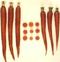 High carotene carrots