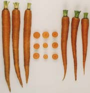 dark orange carrot roots