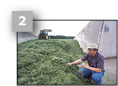 Image of a USDFRC scientist taking a silage sample from on of the bunker silos on the farm.