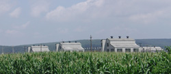 Image of a cornfield overlooking abandoned buildings from the Badger Army Ammunition Plant.
