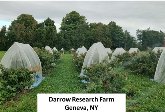 darrow research