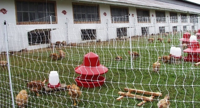 Outside our organic poultry research free-range farm.