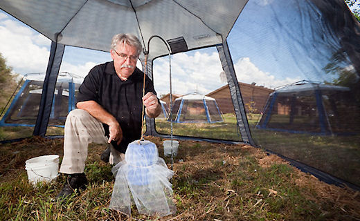 Entomologist Chris Geden sets up an autodissemination device for flies in an outdoor screenhouse.
